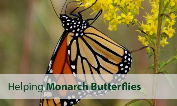 USDA Monarch Butterfly Information