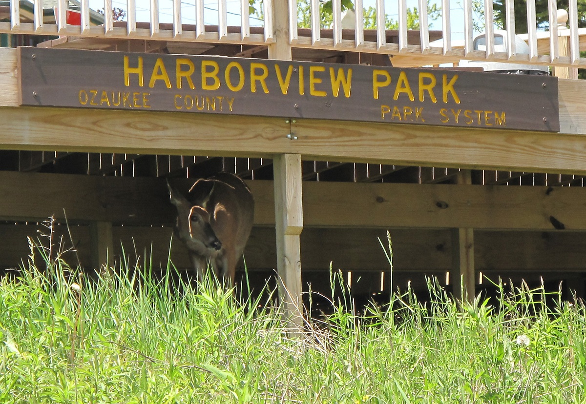 Harborview Deer 003