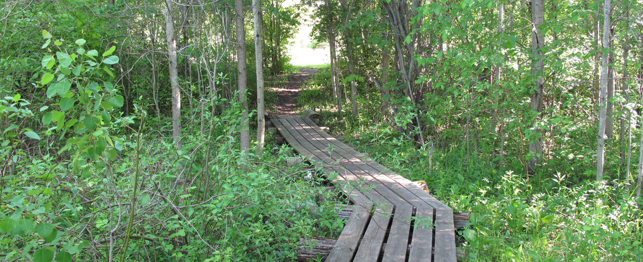 HH Peters Youth Camp Boardwalk Path