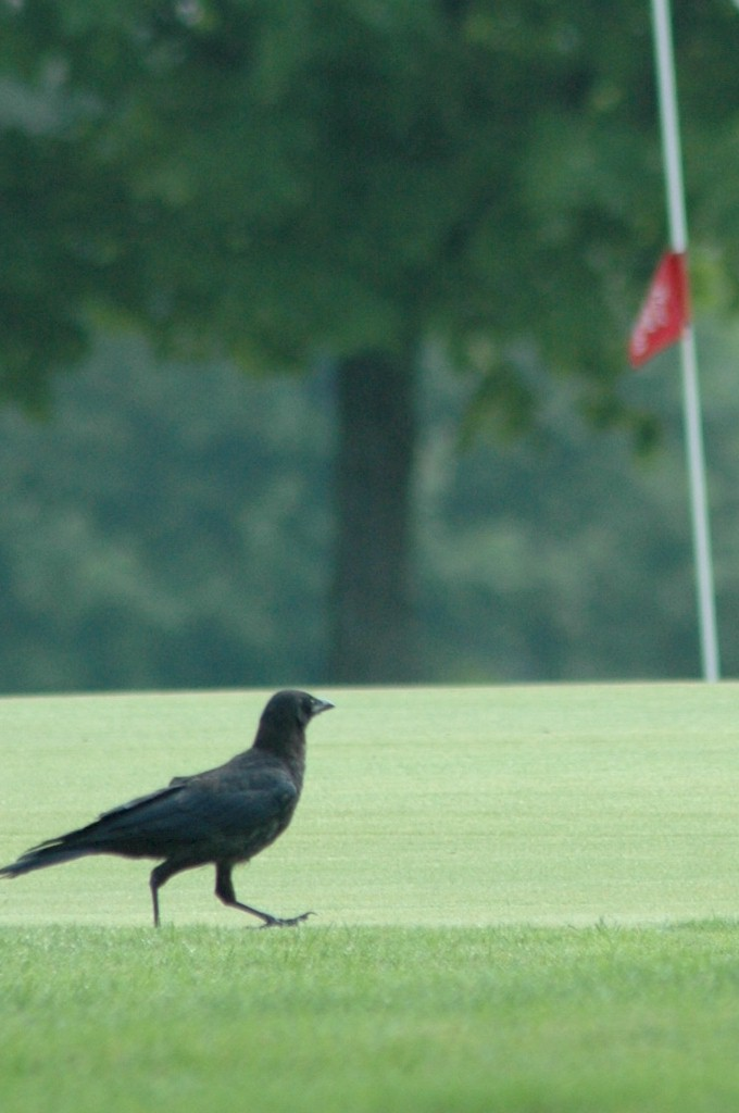 2006 Ozaukee County Golf Tournament
